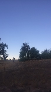 last weekends yoga retreat with rebel & muse up in the mountains of SLO - an early morning shot of the setting full harvest moon:)